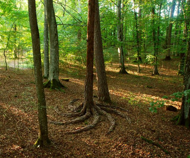 The Land Art of Sylvain Meyer