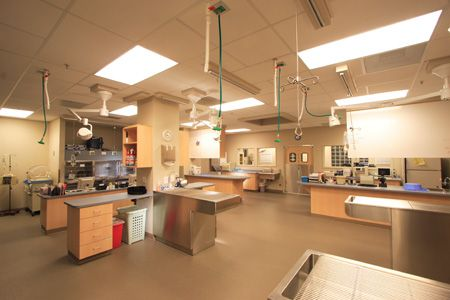 The trend: Design for efficiency in veterinary hospitals - dvm360