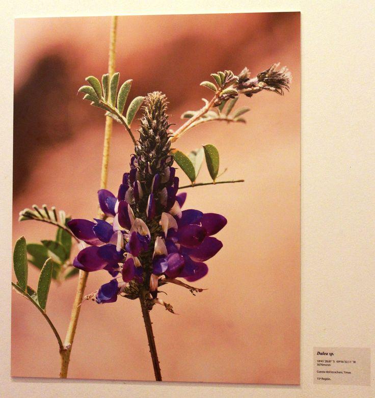 Se puede apreciar directamente en la Sala de Arte Collahuasi en Iquique.