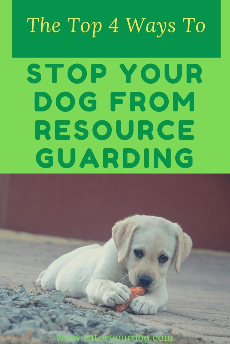 The Top 4 Ways To Stop Your Dog From Resource Guarding Dogs Dog