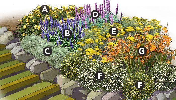 Marathon Bloomers Perennial Garden Plan Plant List A. 3 ...