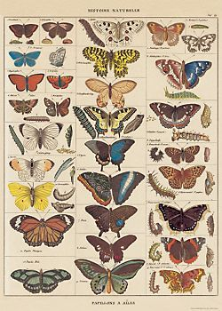 Cavallini Butterfly Natural History Wrapping Paper