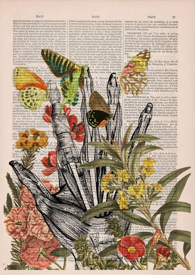 dicionario-ilustracao-9