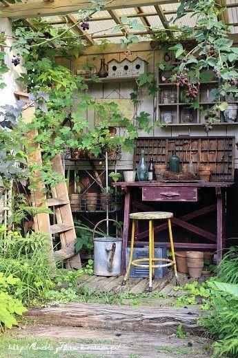 小屋に這わせたブラックベリー。。。 の画像 フローラのガーデニング・園芸作業日記