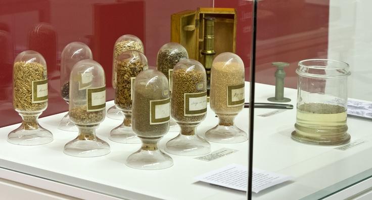 Botes con semillas, procedentes del Museo de Historia Natural del IES 'Cardenal López de Mendoza'.