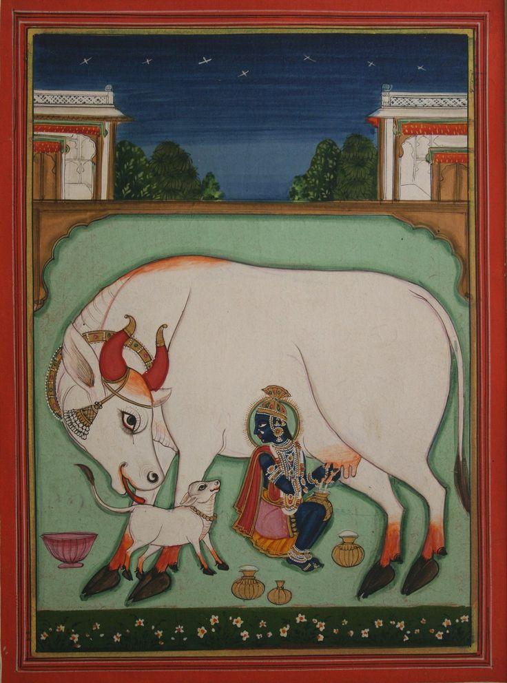 Indian Miniature Paintings - Krishnagopala milking. Nathdwara. Circa 1820. Gouache and gold on wasli. 19cm by 14cm