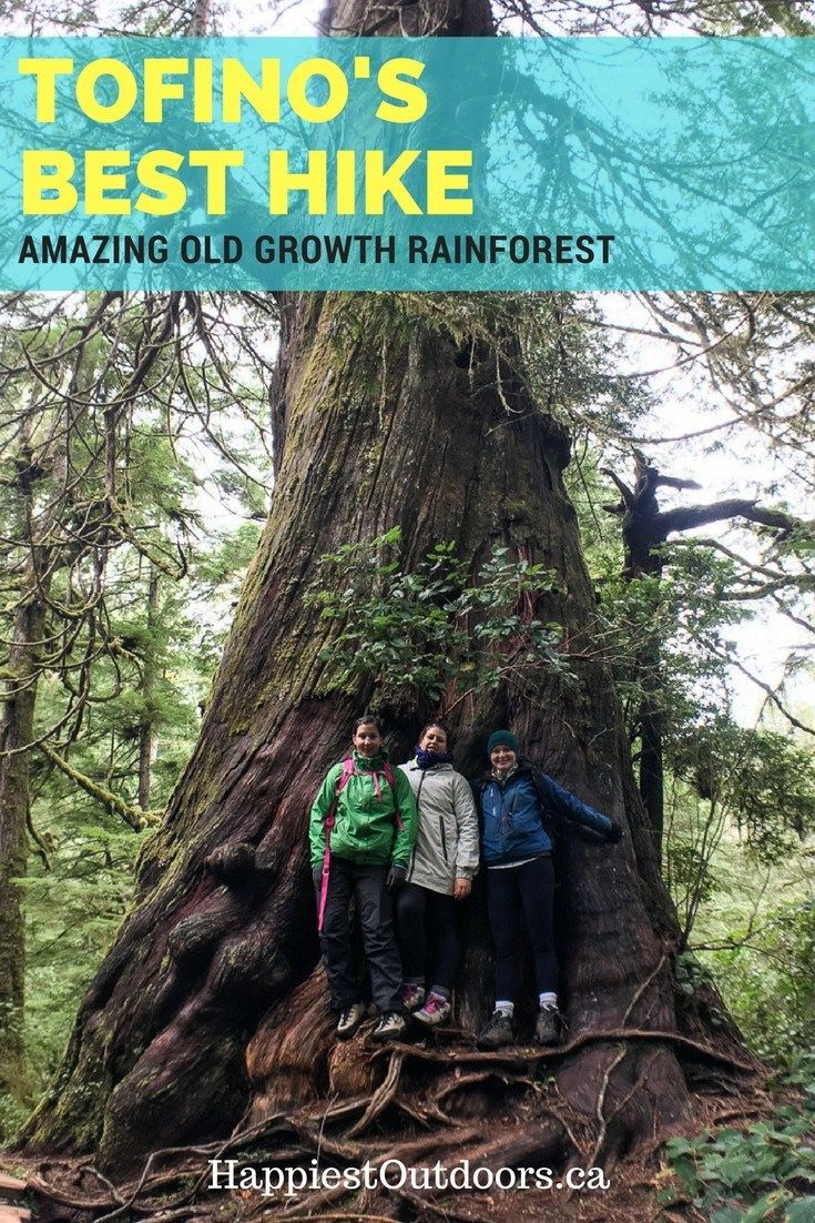 Tofino's best hike: the Big Tree Trail on Meares Island. Hike amongst huge old growth trees in the coastal rainforest of Tofino, British Columbia. Hike to giant cedars in Tofino, Canada.