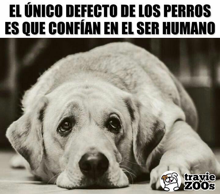 La Imagen Puede Contener Perro Meme Y Texto Dog Phrases Girl And Dog Dog Tumblr