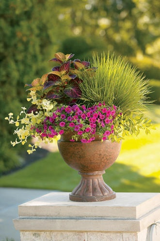 Party of Five--Pink Superbells, Northern Lights Tufted Hairgrass, Goldmound, Lemon Licorice, ColorBlaze Coleus.  Love it!