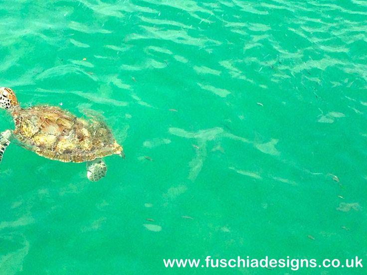 A gorgeous turtle which we were lucky enough to see at the oistins at the fish market in Barbados.  www.fuschiadesigns.co.uk