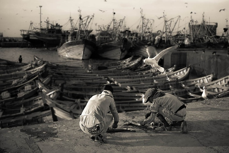 The fishermen and the seagulls. Picture taken in Essaouira, Morocco.