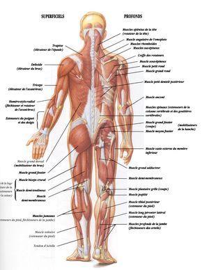 Myofasciite A Macrophages