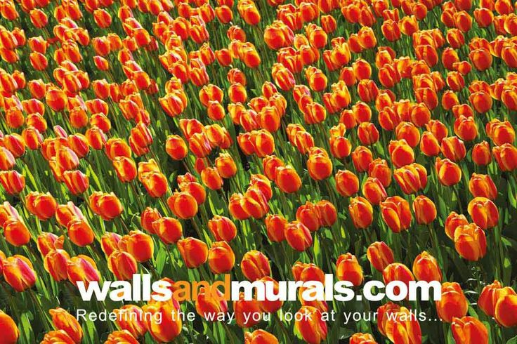 Endless Tulips Wallpaper For Walls