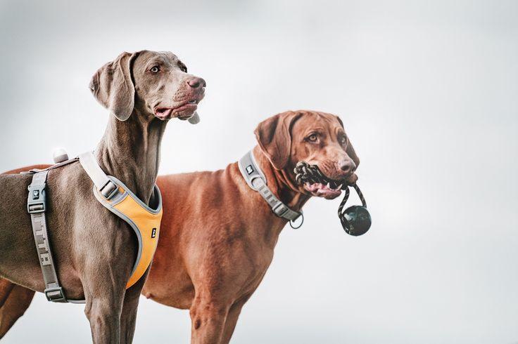 Mukavat ja turvalliset Hurtta Outdoors Adventure -koiranvaljaat auttavat lemmikkiäsi erottumaan pimeässä. / Comfortable and safe Hurtta Outdoors Adventure dog harness helps your dog to be visible in the dark.