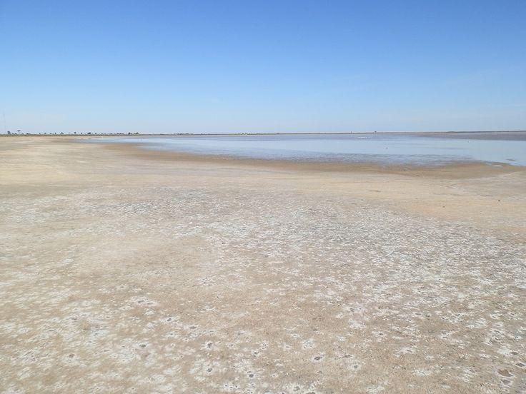 Lake Tutchewop - magnet for migrating birds! #Victoria
