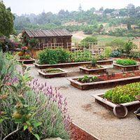 Tips for Growing an Organic Vegetable Garden