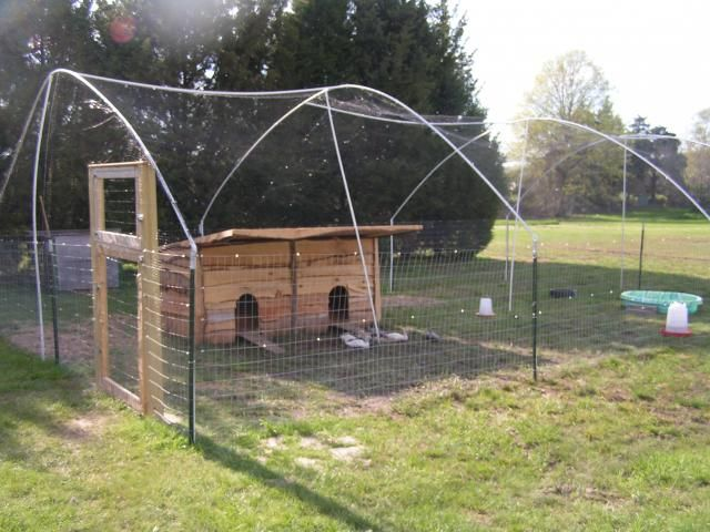 http://www.backyardchickens.com/forum/uploads/25894_pict00582.jpg