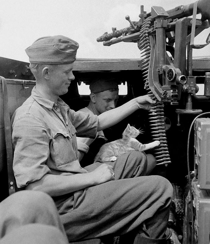 """enrique262: """" The crew of a german half-track and their cat. """""""
