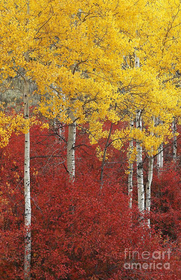 38 best dancing in aspen trees images on pinterest aspen - Hole d entree ...