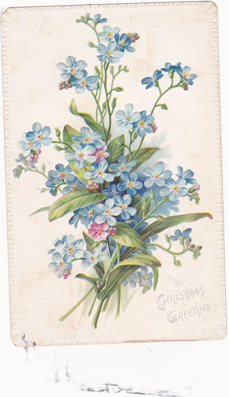 Надписью чай, открытки старинные незабудки