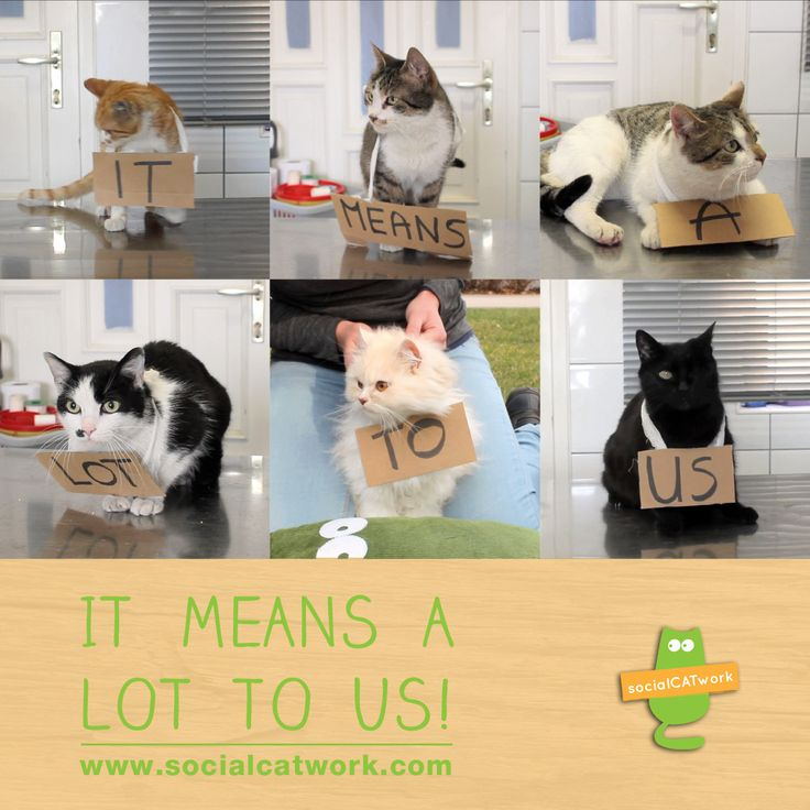 It means a lot to us :) www.socialcatwork.com