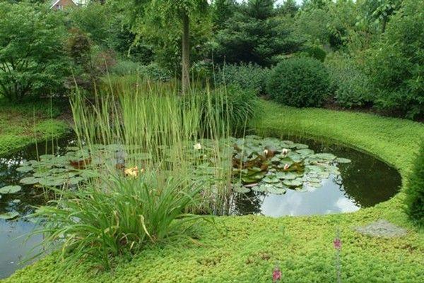 Bassin de jardin bassin jardin aquatique etang dinant for Bache etang belgique