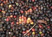 Matagalpa Coffee Tour - Nicaragua | Audley Travel