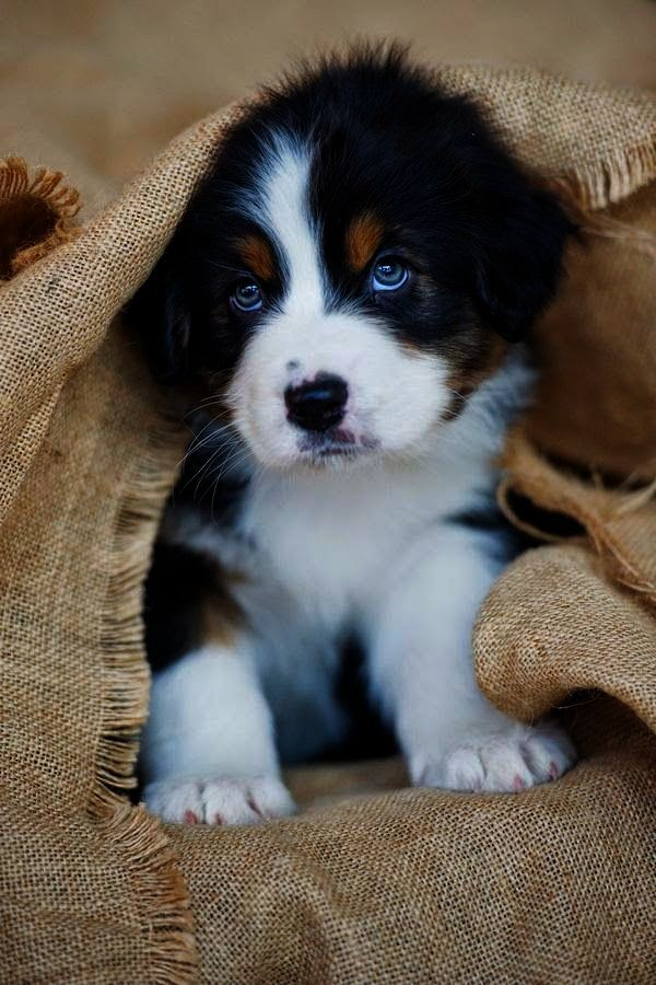Magnificent Pet Dogs For Sale In Hyderabad With Price Cute Baby Animals Cute Animals Baby Animals