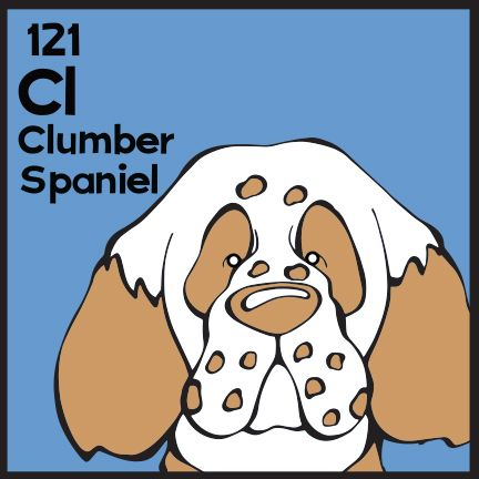 The 121st Elemutt of The Dog Table is the Clumber Spaniel.  The Dog Table Poster features illustrations of 186 dog breeds. Dogs are organized in a similar layout and structure to the Periodic Table.  #dogsofpinterest #ClumberSpaniel BUY THE DOG TABLE POSTER  http://thedogtable.com