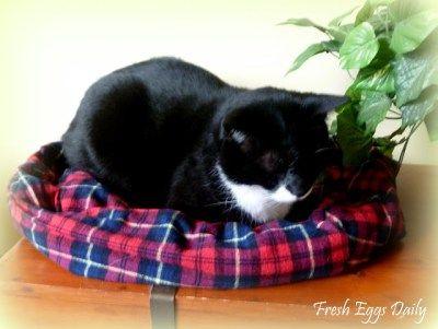 camisa de flanela upcycled em cama do cão acolhedor gato