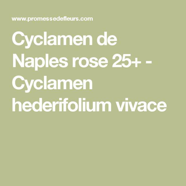Cyclamen de Naples rose 25+ - Cyclamen hederifolium vivace