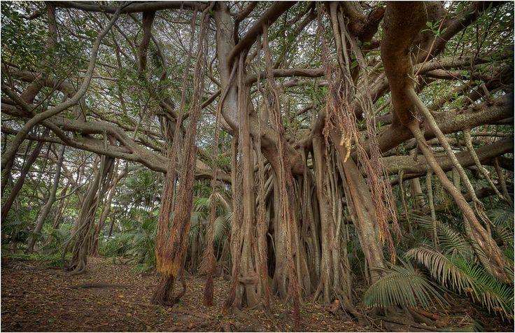 Explore NSW's Howe Island, RoyalAuto Nov 2106. Photo: Getty. #lordhowe #ordhoweisland #nsw