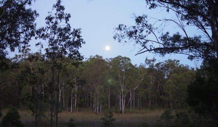 Campsite report: Koreelah Creek campground, Koreelah, NSW - Danny's 4WD Adventures