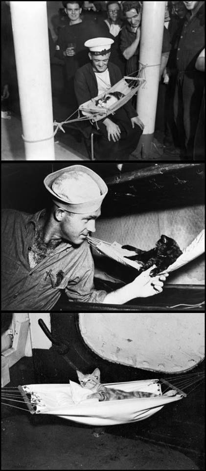 São certamente os soldados mais fofos! Estes são gatos iam pra guerra em navios de e cargueiros. Estes barcos eram infestados de ratos. Então os gatos, além de proporcionarem um momento de distração para a tripulação, trabalhavam caçando os ratos. Alguns, inclusive, ganharam medalhas de honra por terem sobrevivido a vários ataques. Via: https://www.facebook.com/revista.gatomia