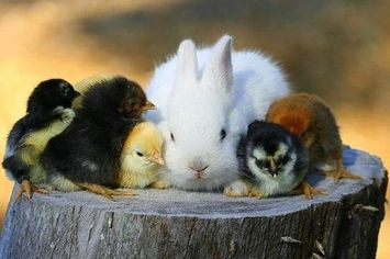 Check Out These Cute Animals That Are Chick Magnets