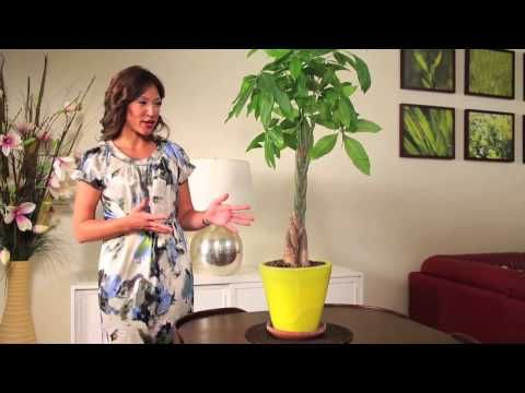 Feng Shui with Asian Plants: Learn How to Feng Shui your House with Indoor Plants! #decor #fengshui #home