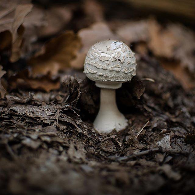 Little one 🍂🍁#vlese #houby #mushroom #fsn_toadstools #inthewoods #fiftyshades_of_nature #beautifulnature #dofnature