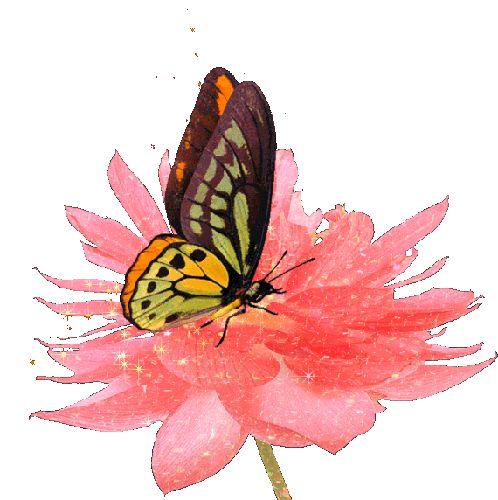 Картинки про, бабочки летают анимация картинки