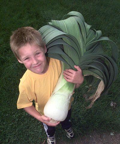 Giant spring onion!