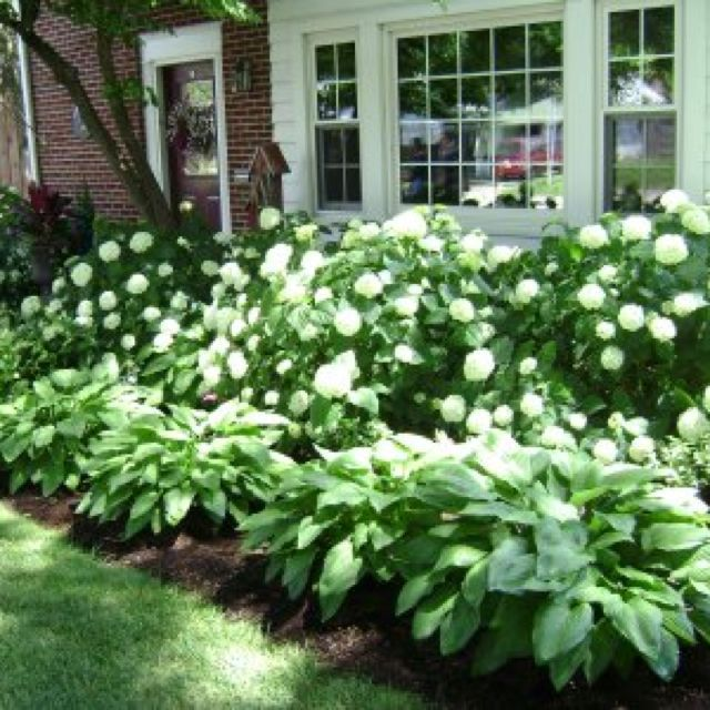 Hostas & Hydrangeas  This is going in my front yard! Love it!!!