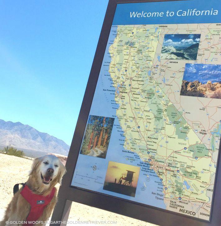California Map Bear%0A a perfect resume format