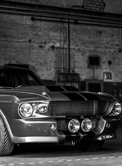 Ford Mustang Shelby. One day I will find her and I will rebuild her...that's my goal