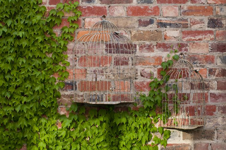 Spring time at The Stables #lush #ivy #creepers #birdcage #rustic