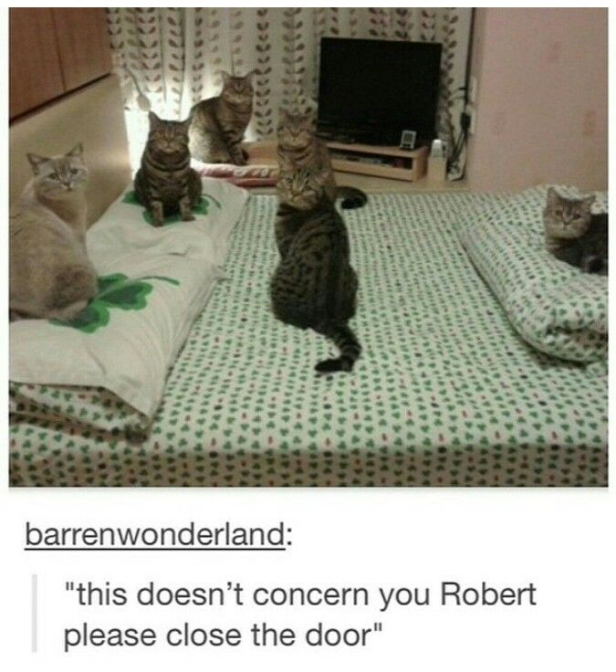 This doesn't concern you, Robert, please close the door. <3 | I can't stop laughing! #cats #funny