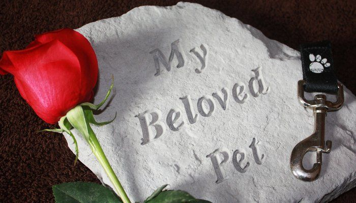 Are Pet Caskets for Dogs Too Much? Do We Really Need Them?