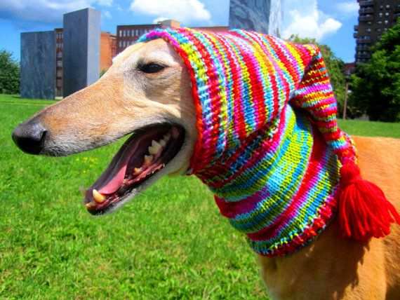 Snood Dog Knitting Pattern Wool And The Gang : Dog hats-hand knit dog hat/greyhound hat/whippet hat/dog ...