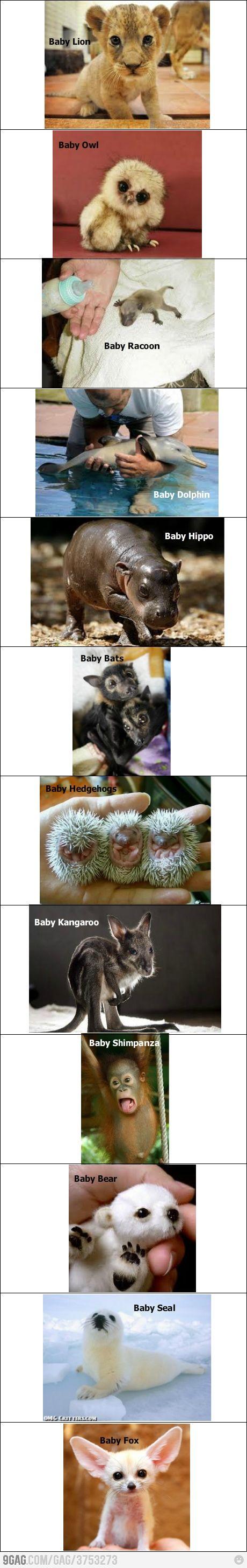 Baby animals! Lion, Owl, Raccoon, Dolphin, Hippo, Bats, Hedgehogs, Kangaroo, Shimpanza, Bear, Seal, Fox. Very cute!