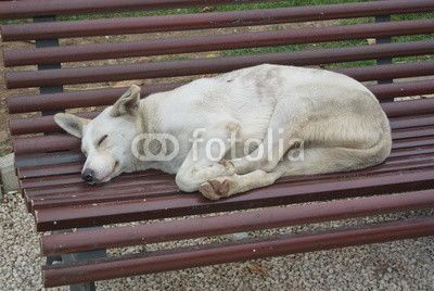 Bucharest, public bench as a bed for a White street dog