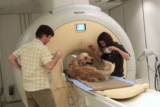 Yes, you're right, it is a nuclear magnetic resonance scanner