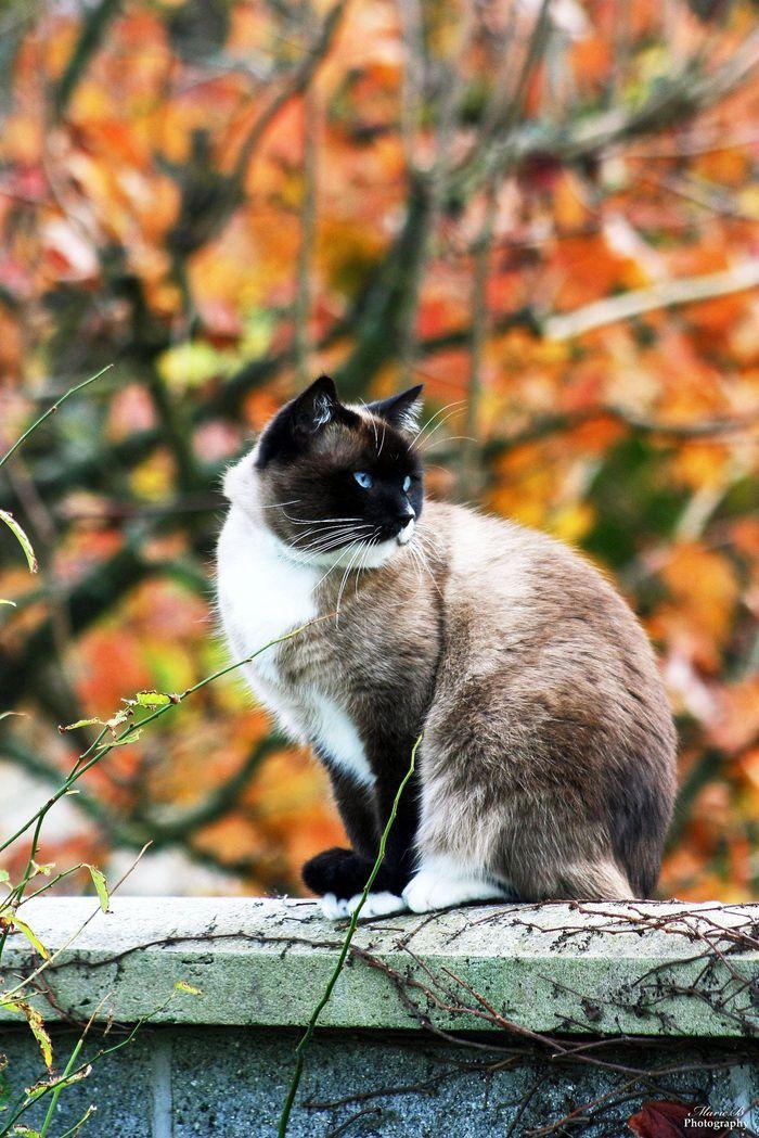 Eliot on Yummypets | Beautiful cat